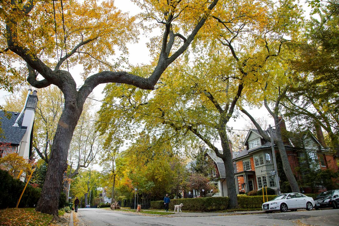 fall-in-toronto-castle-frank-road