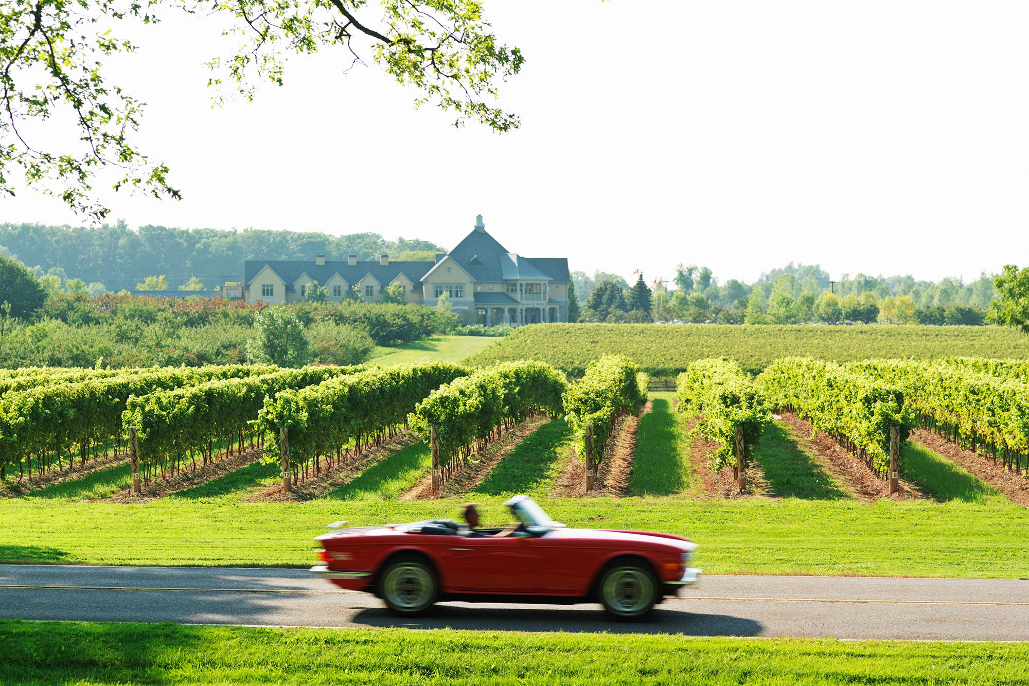 red sports car on road passing vineyards and winery in the Niagara Region